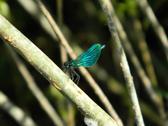 Moth on a tree Stock Photos