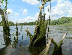 river vegetation - stock photo