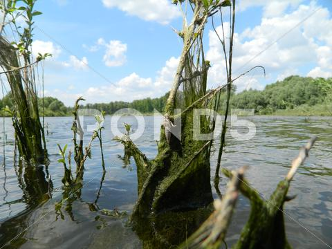 Stock photo of river vegetation