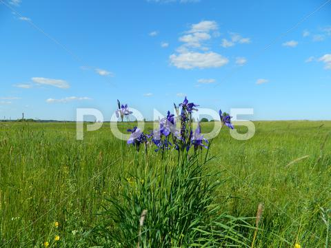 Stock photo of flowers in the field