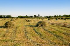 agricultural landscape with sheafs of hay - stock photo