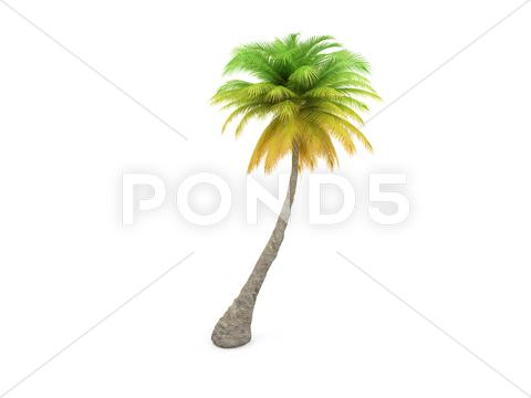 Stock Illustration of green palm on a white background