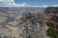 Dead tree in front of grandcanyon Stock Photos