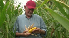 Farmer inspecting his corn in the field, looking at camera, standing - stock footage