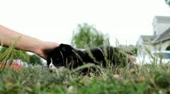 Friendly neighborhood cat pet in gass Stock Footage