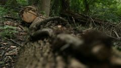 Slow rack focus on long and vine Stock Footage
