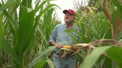 Corn farmer walking through his field towards camera - stock footage