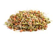 Lentil seeds Stock Photos