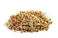 Lentil seeds Stock Photos