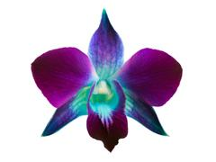 Stock Photo of orchid