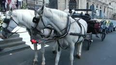 White horses, wedding, city life Stock Footage