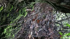 Vertical Spiderweb scene 20110430 160710 Stock Footage