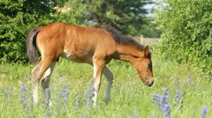 Horse Baby in the grass Stock Footage