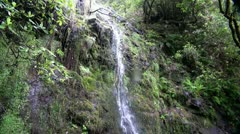 Rainforest waterfall 20110430 162333 Stock Footage