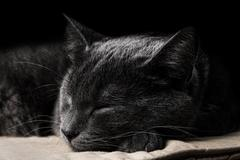 Sleeping dark gray cat Stock Photos