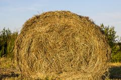 Stock Photo of sheaf of hay