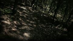 Spooky Walk through Halloween Woods Stock Footage