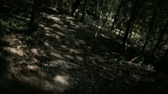 Stock Video Footage of Spooky Walk through Halloween Woods