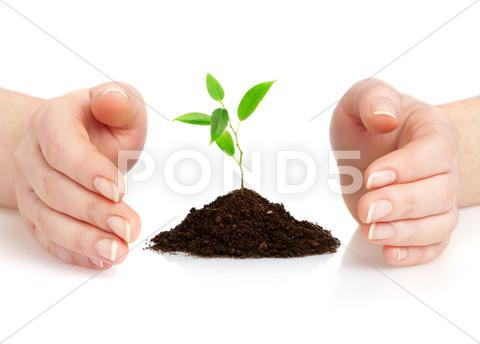 Stock photo of young plant