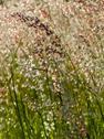 Grass and sunlight Stock Photos
