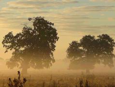 Trees in a fog Stock Photos