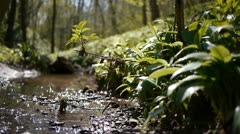 Still shot of a shallow woodland stream. Stock Footage
