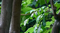 Stock Video Footage of Tree in rain,lush foliage leaves.