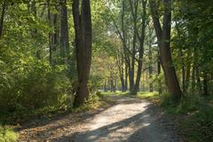 Stock Photo of shady lane in early autumn