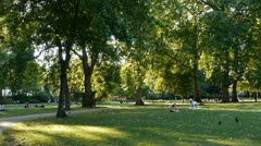 Backlit tree, grass and people in a park. Stock Footage
