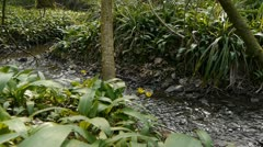 Tracking shot of a shallow stream. Stock Footage