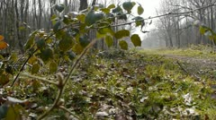 Tracking shot of a woodland path. - stock footage