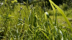 Camera tracks from behind some grass to a view of a long woodland path. Stock Footage