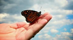 Monarch Butterfly in Hand Stock Footage