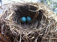 nest - stock photo