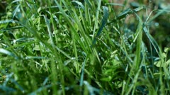 Camera moves past some wet grass and undergrowth. Stock Footage