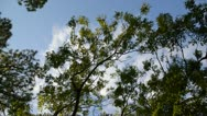 Stock Video Footage of Trees Being Blown by Wind & Clouds Moving Across Sky