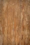 textured wood background - stock photo