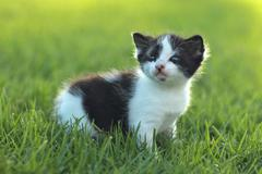 baby kitten outdoors in grass - stock photo