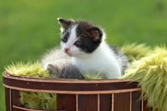 Stock Photo of baby kitten outdoors in grass