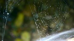 Hämähäkinverkko hämähäkinseitit vieressä puroihin vettä. Arkistovideo