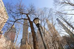 Buildings and naked trees in new york Stock Photos