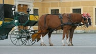 Horses for hire in Vienna Stock Footage