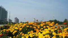 Town of Heihe. Flower bed with yellow flowers Stock Footage