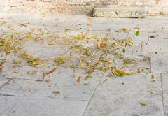 wind whirls leaves - stock photo