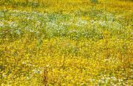 Flower greenland Stock Photos