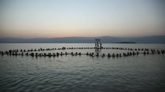 Spencer Tunick 'Save the Dead Sea' floating installation - stock footage