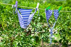 Swimsuit in green garden Stock Photos