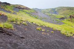 first plants on volcano gentle slope - stock photo