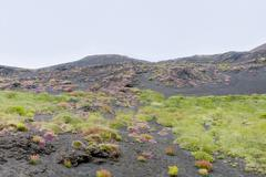 plants on volcano gentle slope - stock photo