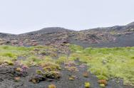 Stock Photo of plants on volcano gentle slope